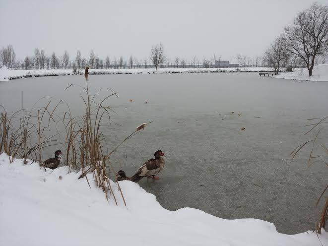 zimsko pecanje zimi