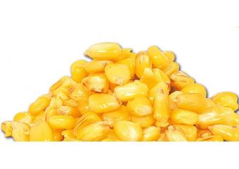 Carp kukuruz 3kg